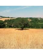 Prodotti di farro da coltivazione biologica 100% italiano